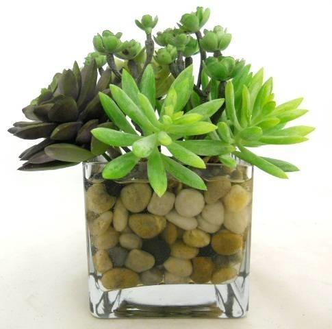 Piante grasse artificiali le piante grasse piante - Vasi con piante grasse ...