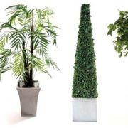 piante grasse finte