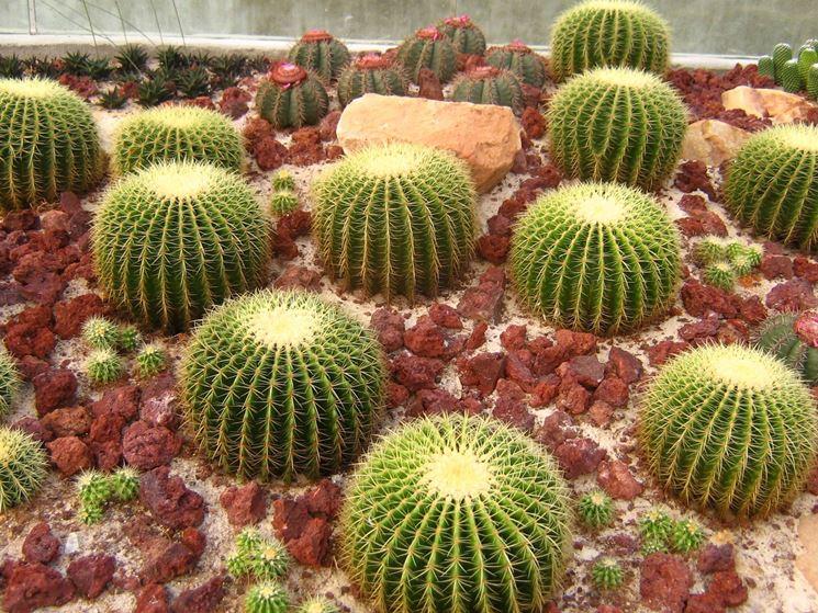 Piante grasse cactus le piante grasse cactus