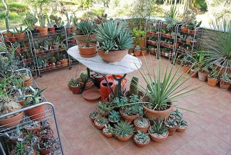 Giardini piante grasse per esterno yk35 regardsdefemmes for Fiori da balcone perenni