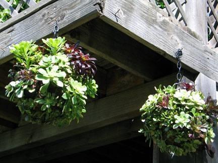 fiori e piante piante da balcone : Piante grasse da balcone - Le Piante Grasse - Piante grasse da balcone