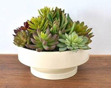 piante finte vaso