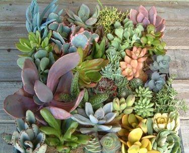piante grasse ricche