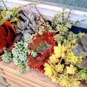 piante grasse in composizione