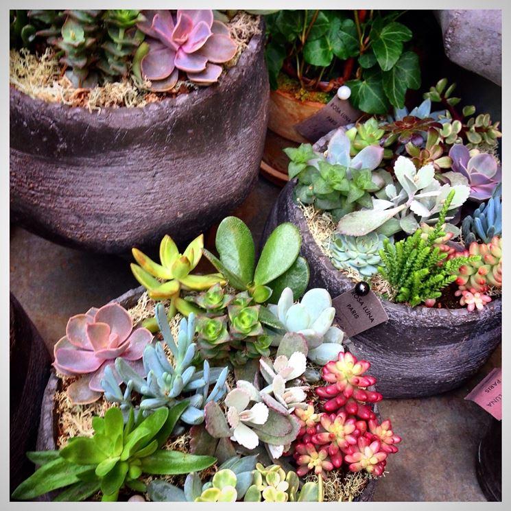 succulente in composizioni colorate