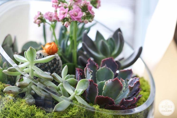 succulente in vaso di vetro