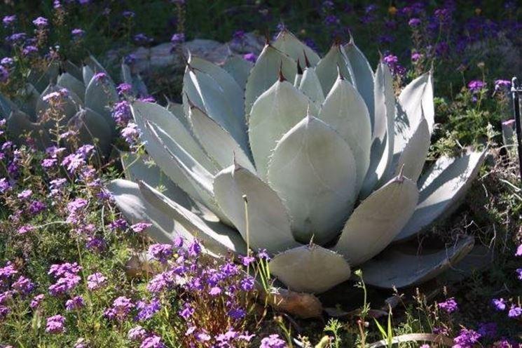 Vendita piante grasse le piante grasse vendita piante for Vendita semi fiori