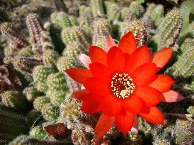Vendita piante grasse - Le Piante Grasse - Vendita piante grasse online