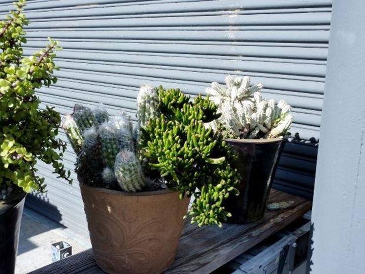 Composizione di succulente