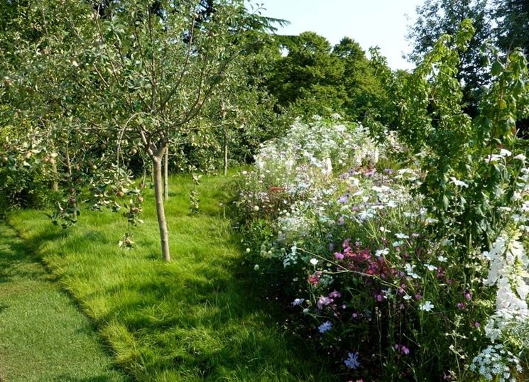 coltivazione alberi da frutto piante in giardino come