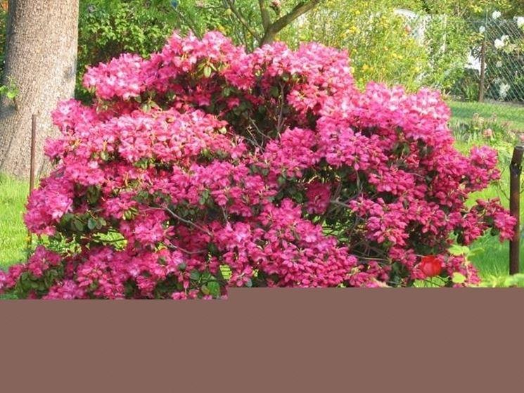 Come coltivare le piante da giardino piante in giardino for Piante fiorite perenni da esterno