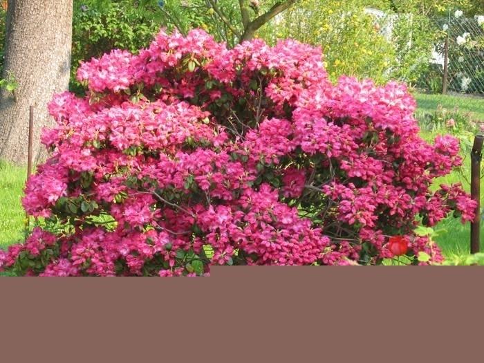 Piante esotiche da giardino piante esotiche da giardino - Piante da giardino ornamentali ...