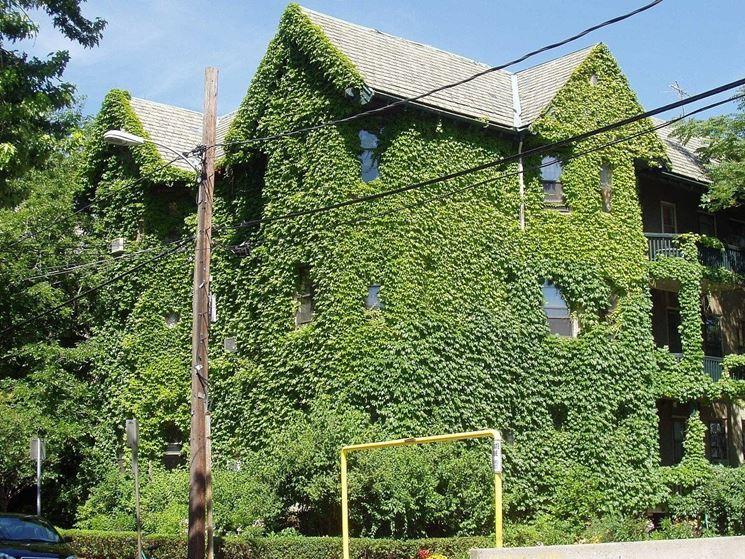 Casa ricoperta dall'edera