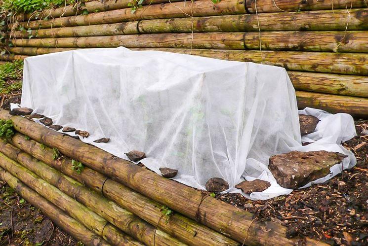 Piante circondate con un velo di protezione contro il freddo