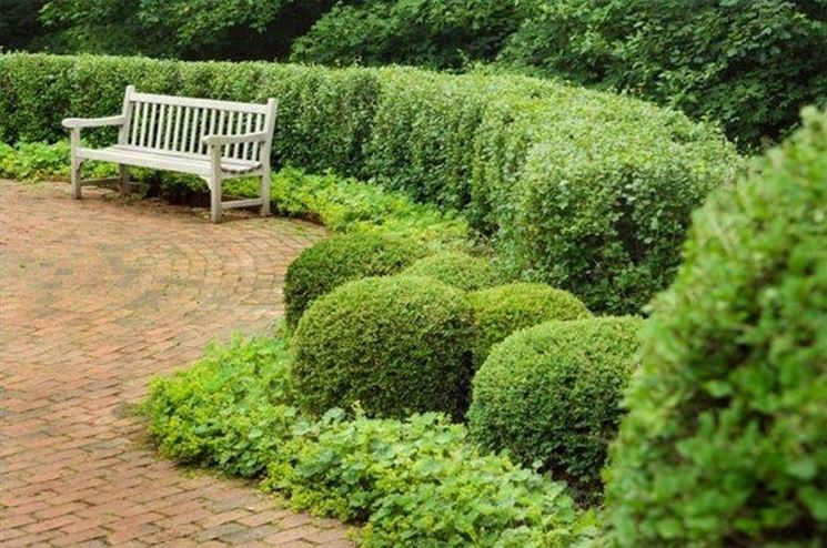 Curare siepi da giardino - Piante in Giardino - Consigli per la cura ...