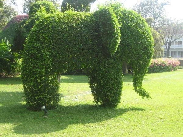 Curare siepi da giardino piante in giardino consigli - Sempreverde da giardino ...