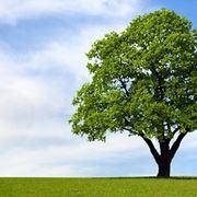 Coltivare il caprifoglio rampicante piante in giardino coltivazione caprifoglio - Piante e alberi da giardino ...