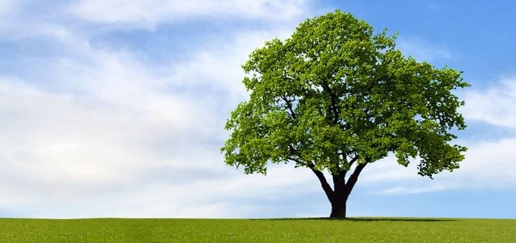 I migliori alberi da giardino piante in giardino gli - Alberi sempreverdi da giardino ...