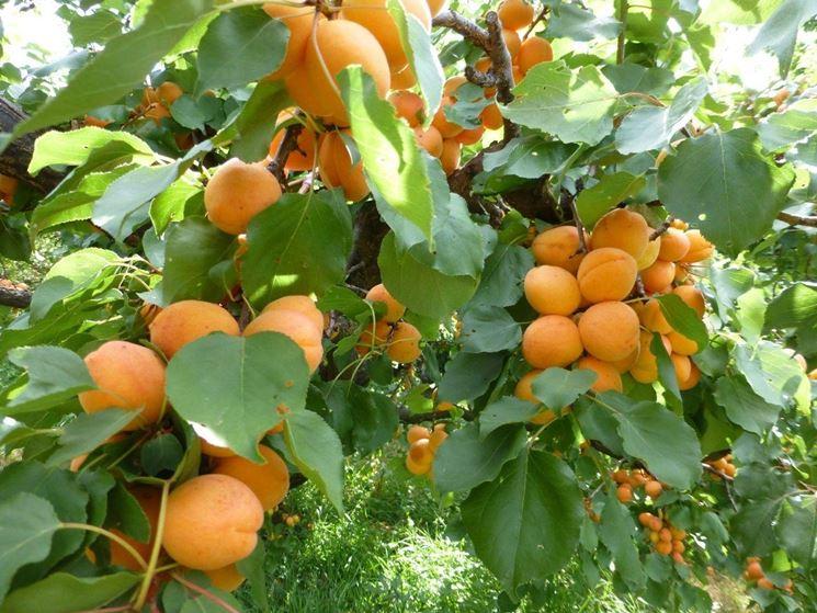 I migliori alberi da giardino piante in giardino gli - Alberi frutto giardino ...