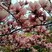 migliori alberi da giardino