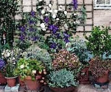 Piante da vaso per esterno piante in giardino le for Arbusti da vaso per esterno