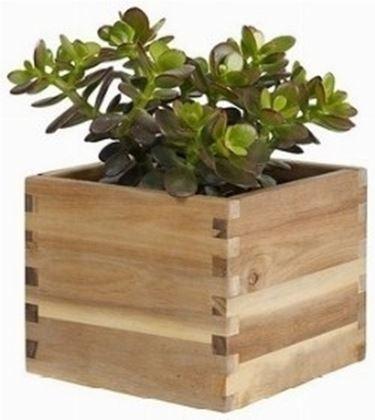 Piante da vaso per esterno piante in giardino le for Piante invernali da esterno vaso