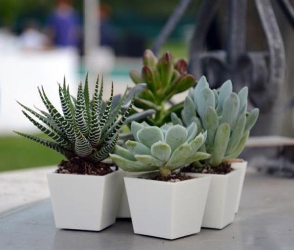 Caratteristiche dei vasi per piante grasse scelta dei - Vasi con piante grasse ...