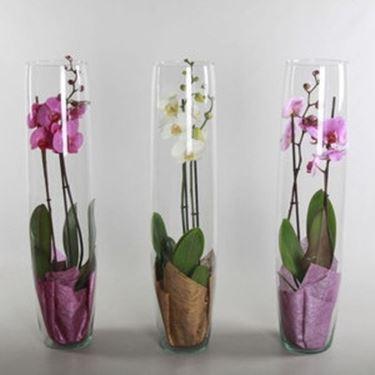 Come scegliere i vasi per orchidee scelta dei vasi - Vasi per orchidee ...