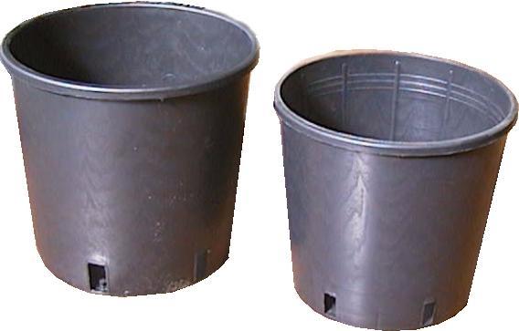 Come scegliere i vasi per vivai scelta dei vasi ecco for Piante da vivaio