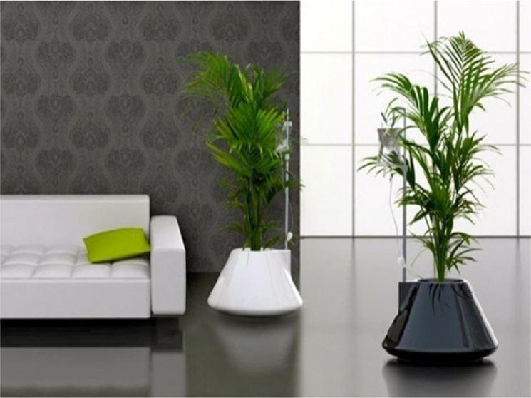 Vasi per piante da interni idee creative e innovative for Piante da comprare
