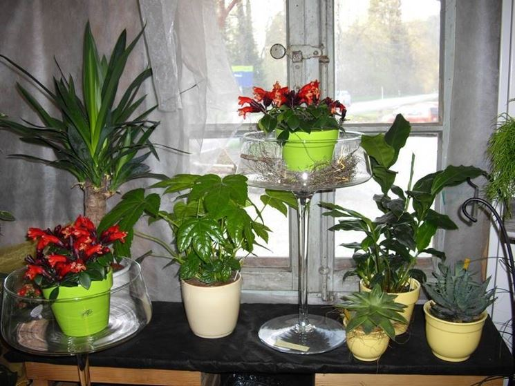Piante e fiori al riparo durante la stagione fredda