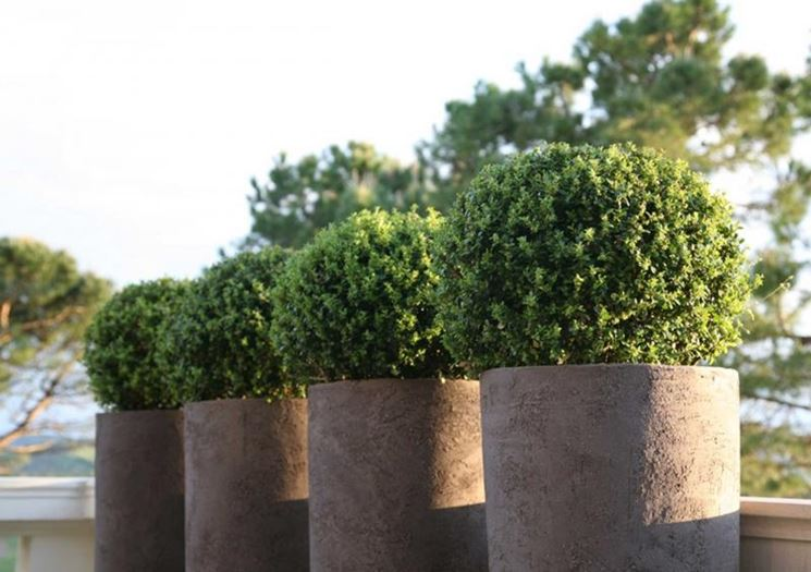 Vaso Esterno Grigio : Modelli di vasi resina da esterno scelta dei vasi i principali