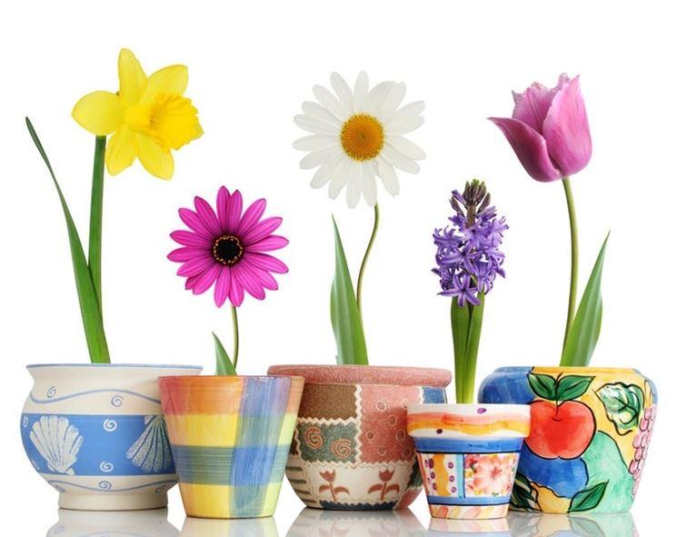 Alcuni tipi di vasi