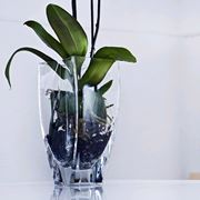 vaso orchidee Cristal S�vres