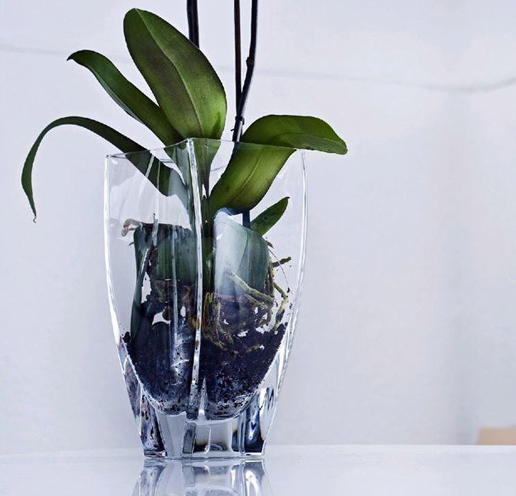 vaso orchidee Cristal Sèvres
