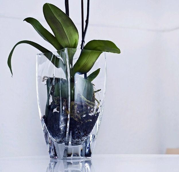 Perch scegliere i vasi moderni scelta dei vasi perch - Vaso in gres per orchidee ...