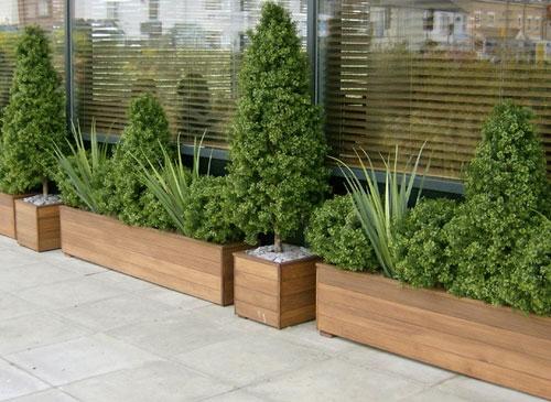 Scegliere i vasi per piante da esterno scelta dei vasi - Piante sempreverdi per terrazzi ...