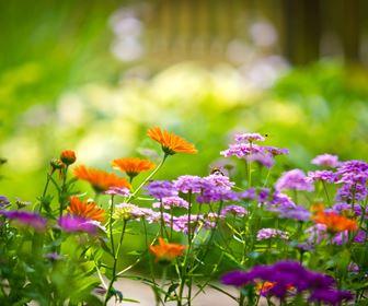 quale giardino